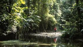 クイーンズランド州湿潤熱帯地域01