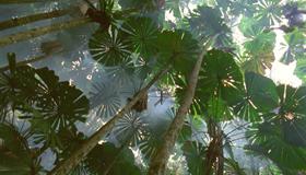 クイーンズランド州湿潤熱帯地域02