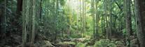クイーンズランド州湿潤熱帯地域