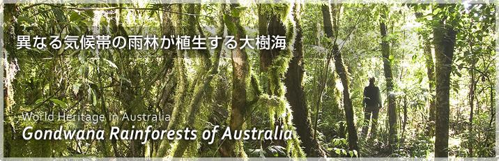 オーストラリア・ゴンドワナ多雨林