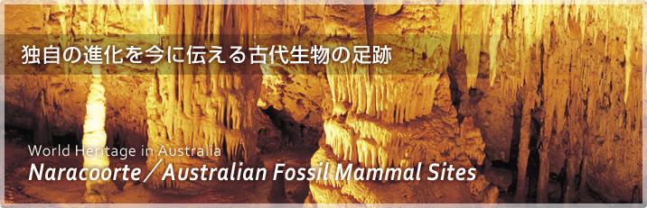 ナラコート/リバースレー哺乳類化石地域